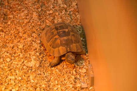 filings: tortoise