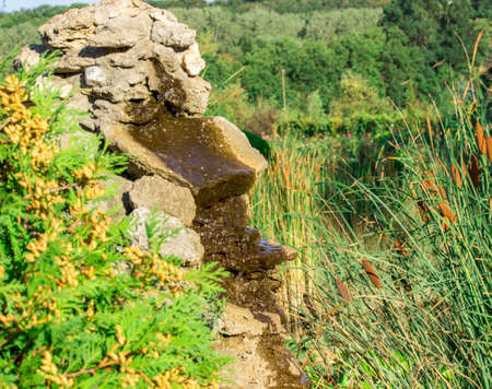 cattails: decorative pond with cattails