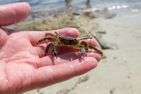 Small crab in hand Stock Photo