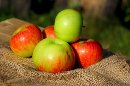 Season autumn natural organic apples on wooden, blurred green grass and coarse cloth sacking background with place for you text.
