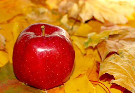 caes: Ripe natural organic red colorful apple on wooden and fall autumn leaves background with copyspace for you text.