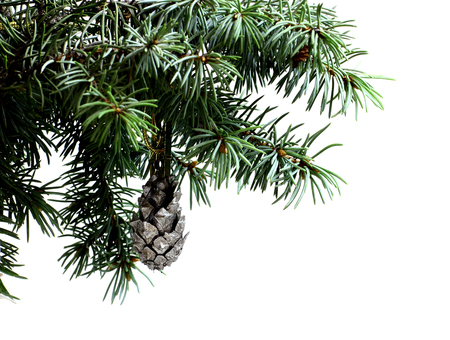 dcor: Fir tree branch isolated on white background with silver pine cone in top frame corner. New Year and Christmas blank template. Big white copyspace place for text or logo.