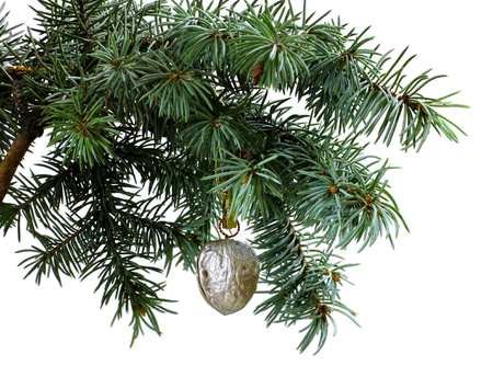 Fir tree branch isolated on white background with silver gold walnut in top frame corner. New Year and Christmas blank template. Big white copyspace place for text or logo. Stock Photo