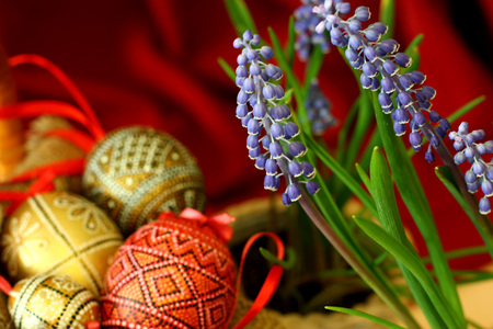 Easter eggs on basket and blue spring flowers. Template for congratulations card with red cloth background.