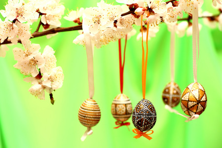 Easter eggs on flowering tree branch. Template for congratulations card with spring background.