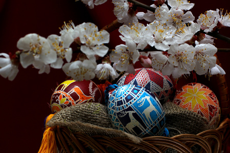 Easter holidays card with decorated eggs and  Spring of flowering tree.
