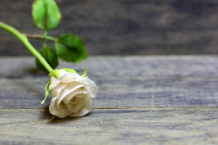 Rose flower on wooden background. Concept for congratulations card background. Copyspace.
