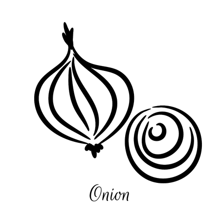 Onion hand drawn doodle vector icon. Slice and rings vegetable sketch illustration. Illustration