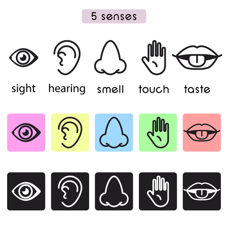 Five human senses sight, hearing, smell, touch and taste vector line icon illustration. 5 senses icons. Stock Illustratie