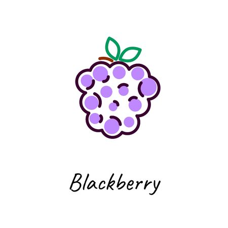 Blackberry icon vector illustration on white. Outline colored style. Stock Illustratie