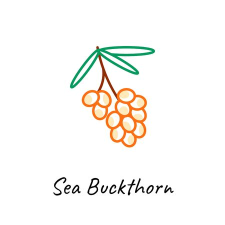 Sea buckthorn berry icon vector illustration on white. Outline colored style.