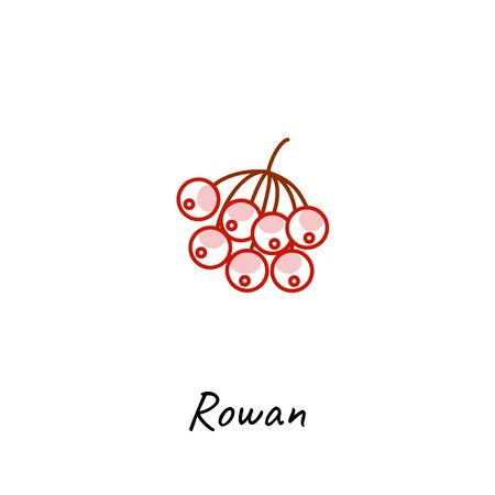 Rowan berry icon vector illustration on white. Outline colored style.