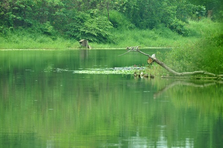 wetland conservation: Niaosung Wetland Park is the first park themed as a constructed wetland dedicated to wildlife conservation. Cheng ching Lake, Kaohsiung, Taiwan
