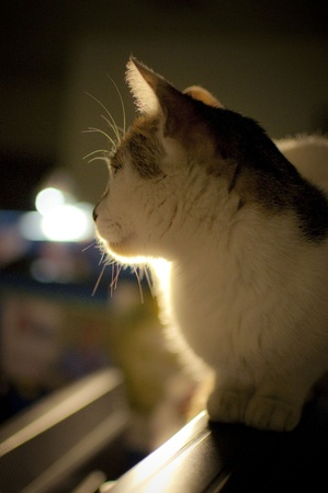 Lonely cat, she is thinking about the future  Back light