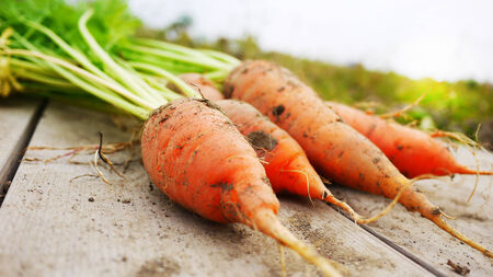 Carrot on the wooden table, just freshly pulled from the earth Stock Photo