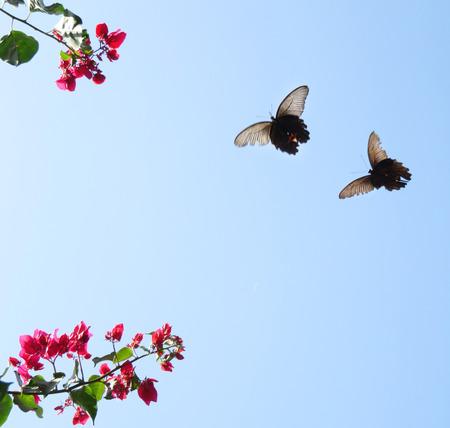 Lovely butterfly dancing in the sky