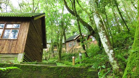 Wooden house in green forest Stock Photo