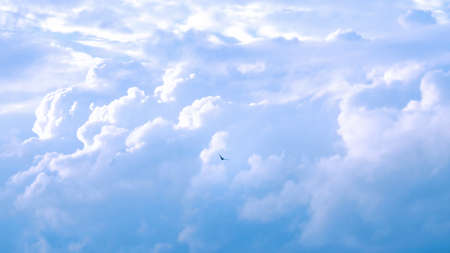 Bird are flying over the blue sky