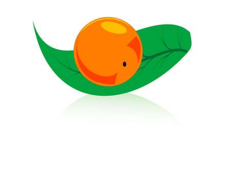 orange with leaf on isolated background   photo