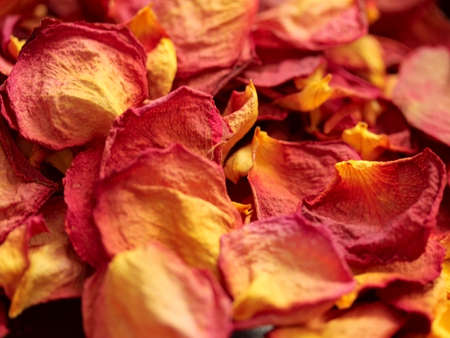 Colorful dry rose petals Stock Photo