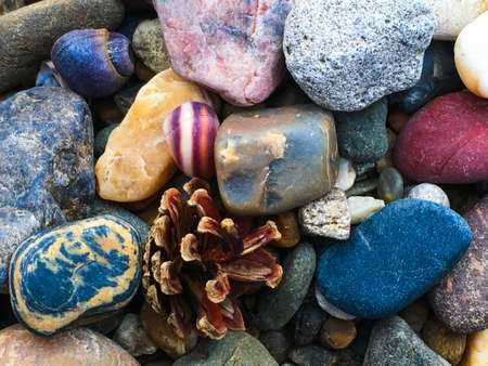 composition of stones, shells and cones Imagens
