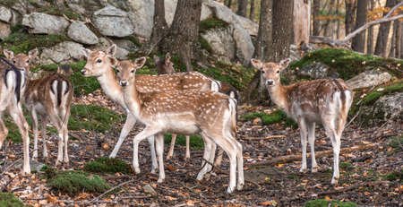 Group of Baby Deers in a Fairy Forest