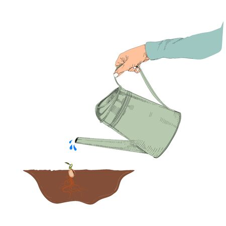 Vector illustration of watering seed,Seed growing
