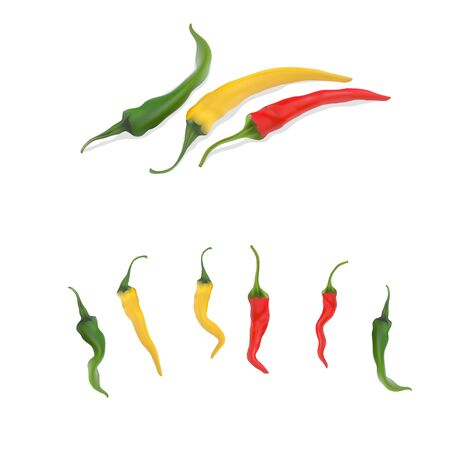High detailed vector peppers and set of different chilis, Ilustracja