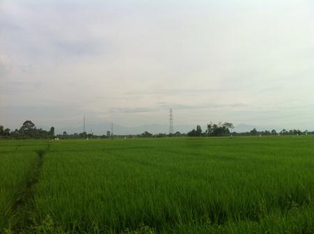 padi: Beautiful View