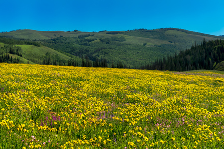 Beautiful wildflowers in a meadow with mountains in the background on a spring day