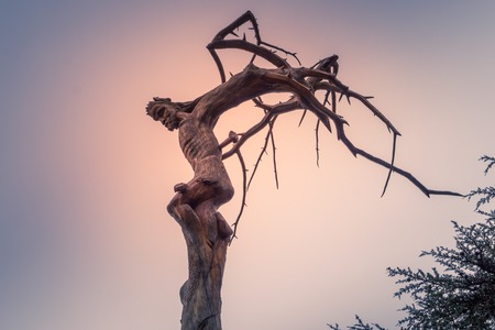 Christ crucifixion carved into a tree in Lebanon