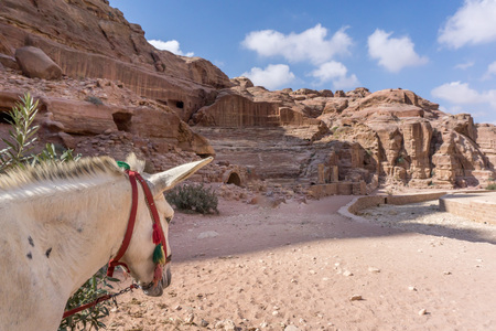 Jordan Middle East November 2017: Donkey waiting for Tourist in the ancient city of Petra