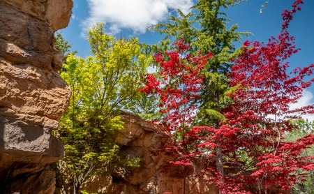 Colorful red and green trees in Spring along a mountain trail