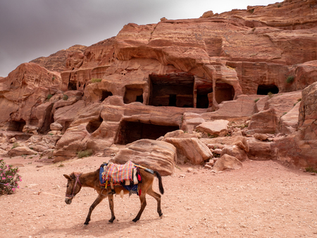 Lone donkey walks along the trail with caves in the background at Petra, Jordan Фото со стока