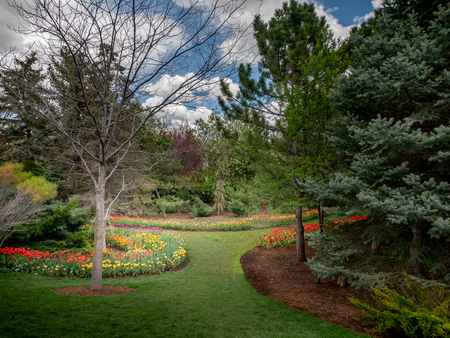 Colorful flowers decorate the landscape in a beautiful garden or park
