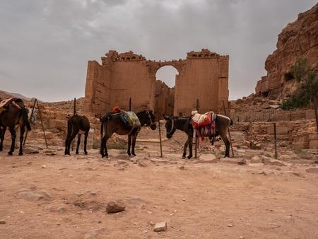 Donkeys waiting near the Roman ruins at Petra, Jordan