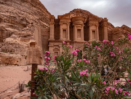 Pink wild desert flowers growing in front of the monastery at Petra, Jordan