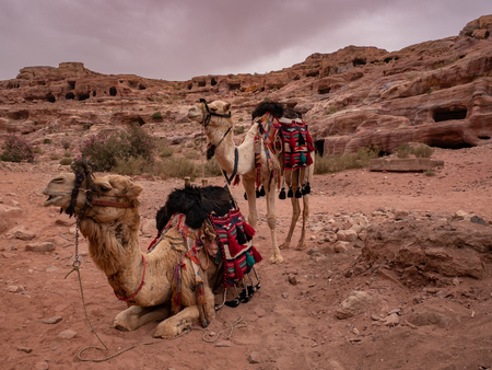 Colorfully decorated camels wait to take tourists for a ride at Petra, Jordan