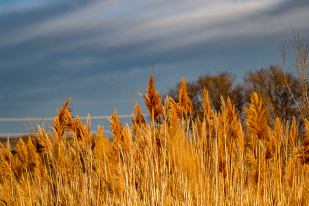 Golden tones as the sun lights up the dry grass with blurred background