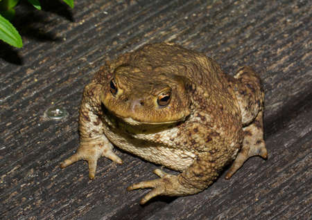 A toad looking very interested at asmall pond Stockfoto