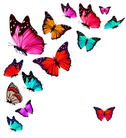 Colorful Butterflies Flying On White Background
