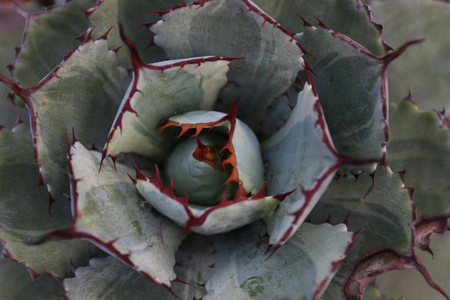 thorn tip: Succulent plants Stock Photo