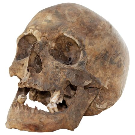 totenk�pfe: Close-up Foto von Human Skull Isolated on white background  Lizenzfreie Bilder