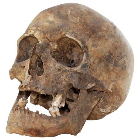 horror skull: Close-up Photo of Human Skull Isolated on white background