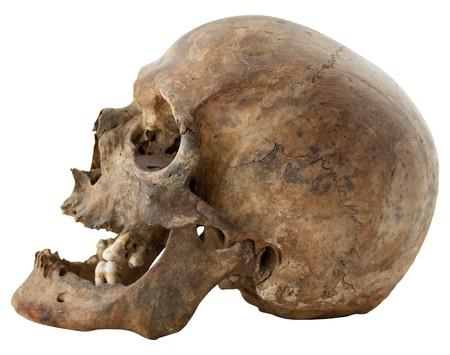 Close-up Photo of Human Skull Isolated on white background Stock Photo - 7574975