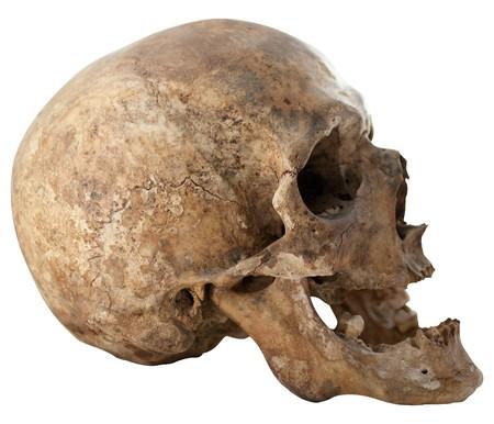 Close-up Photo of Human Skull Isolated on white background