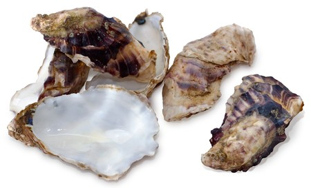 Oyster Shell on White Background Stock Photo - 7574976