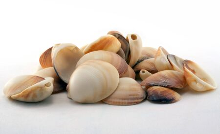 Sea Shells on White Background  photo