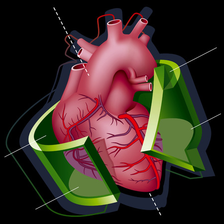 Human Heart with Axes and Green Transparent Arrow around it on Black Background.  Vector