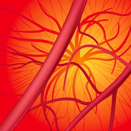 blood vessels: Circulatory system EPS8